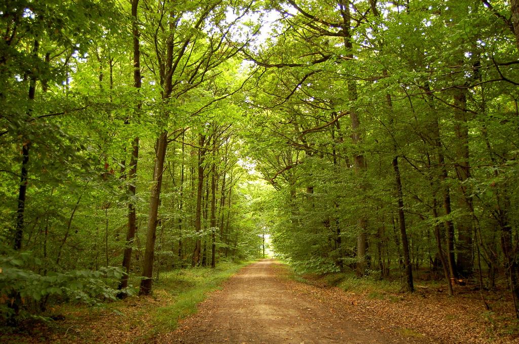 Découverte des arbres autrement